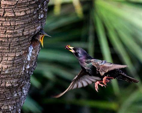 Las mejores fotografías de naturaleza: 8 edición del ...