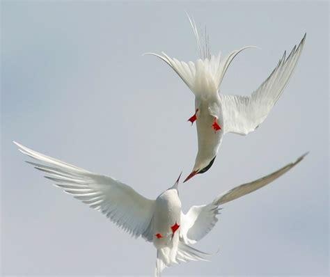 Las mejores fotos de aves en vuelo   Haciendofotos.com