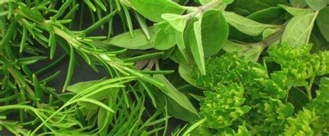 Las mejores hierbas aromáticas para cocinar y sus usos