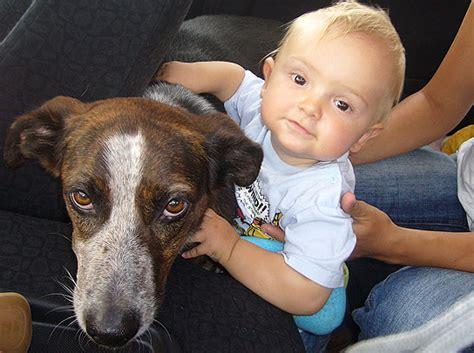 Las mejores mascotas para niños pequeños, sus pros y ...