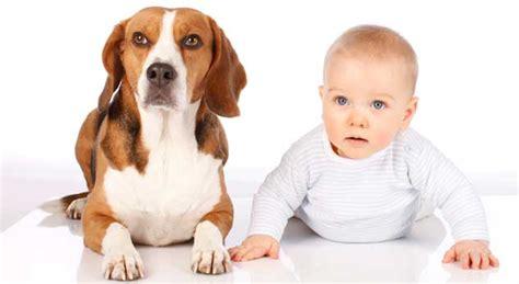 Las mejores mascotas para tus hijos 【 2020 】   Solo para ...