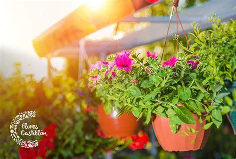 Las mejores plantas de exterior colgantes | Flores Castillón
