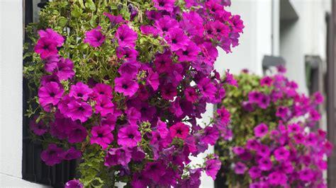 Las mejores PLANTAS de exterior RESISTENTES al FRÍO y CALOR