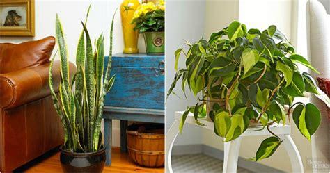 Las mejores plantas de interior y exterior para gente ocupada