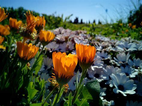 Las mejores plantas de verano para poner a pleno sol