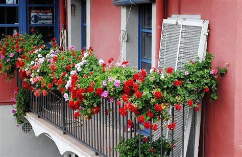 Las mejores plantas para decorar tu balcón | Decoora