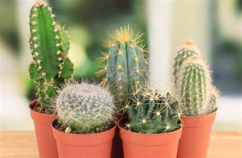 Las mejores plantas para tu hogar   Noticias   AdondeVivir