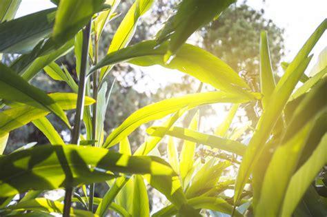 Las mejores plantas para tu terraza   Plantesdecor