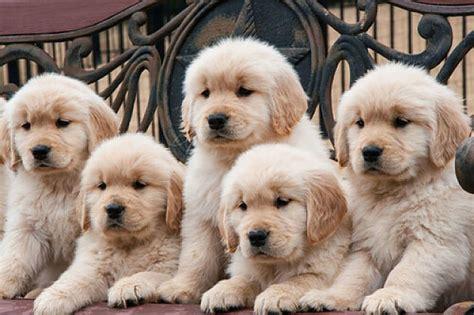 Las mejores razas de perros para los niños y la familia