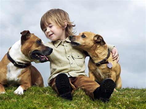 Las mejores razas de perros para niños   Me lo dijo Lola