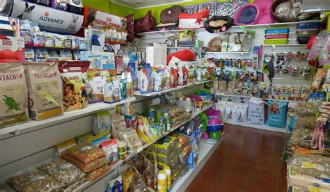 Las mejores tiendas de perros en Valencia  Guía 2020