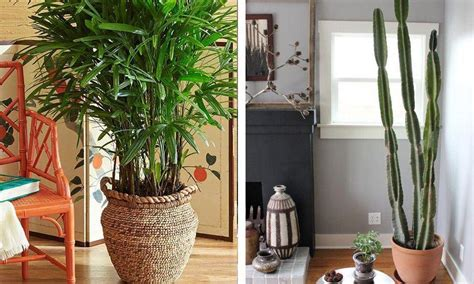Las mejores y más resistentes plantas de interior   Casas ...
