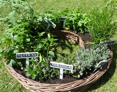 Las necesidades básicas de las plantas aromáticas ...