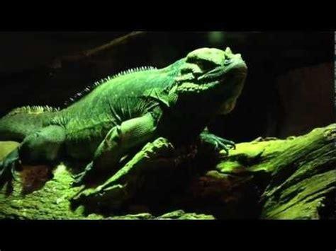 Las Noches  caras  del Zoo | Zoo, Zoo de madrid, Caras