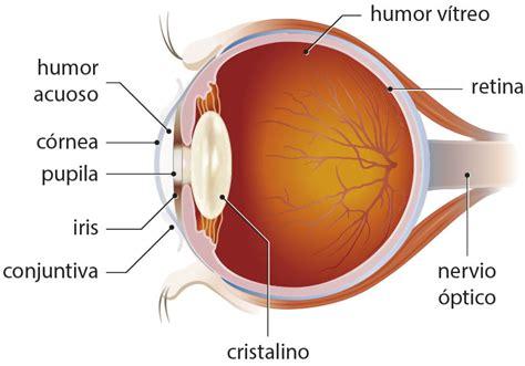Las partes del ojo • Portal de Salud