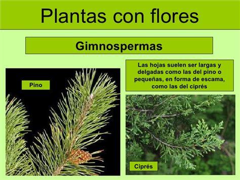 Las plantas  adaptada