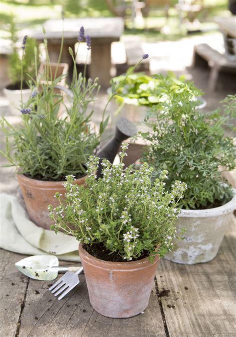 Las plantas aromáticas más fáciles de cuidar