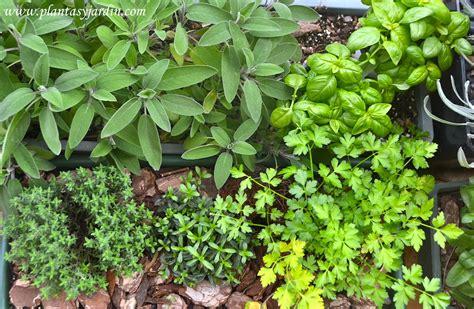 Las plantas aromáticas, necesidades de cultivo | Plantas y ...