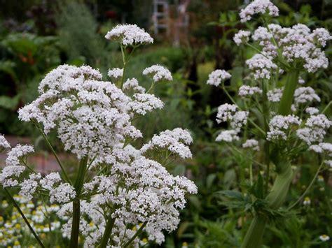 Las plantas aromáticas y medicinales más conocidas | Plantas