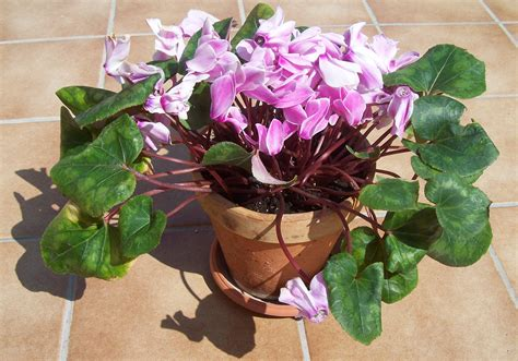 Las plantas de exterior que aguantan el frío invierno ...