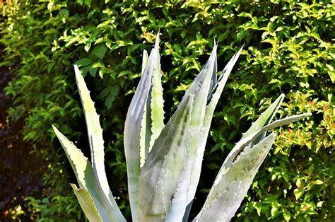 Las plantas más resistentes al sol adecuadas para el jardín