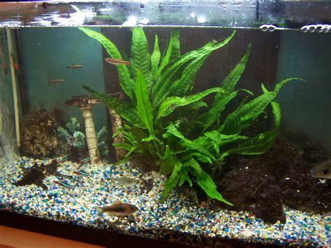 Las plantas para acuarios más recomendadas | Mascotas