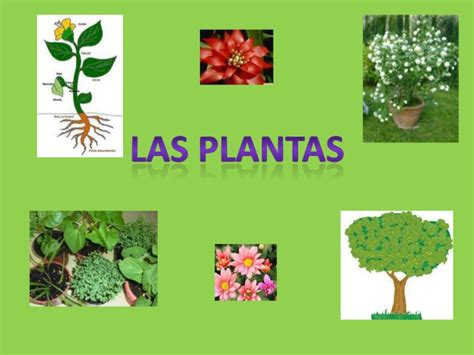 Las plantas power point