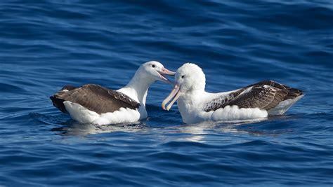 Las poblaciones de aves marinas han caído un 70% desde los ...