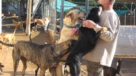 Las protectoras de animales claman contra el abandono y ...