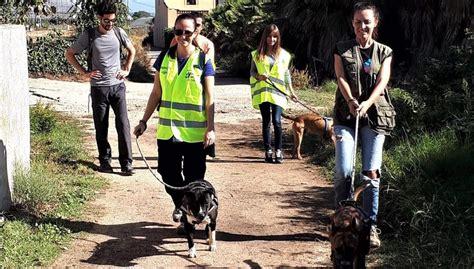 Las protectoras de animales ponen en marcha la captación ...