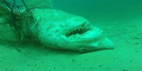 Las redes para tiburones crean un falso sentimiento de ...