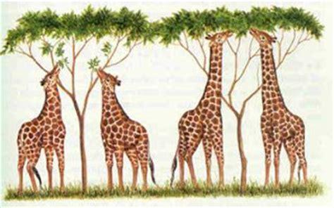 Las teorías evolutivas   El mundo de la biología