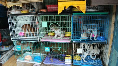 Las tiendas de animales de Brasil ya no podrán exponer ...
