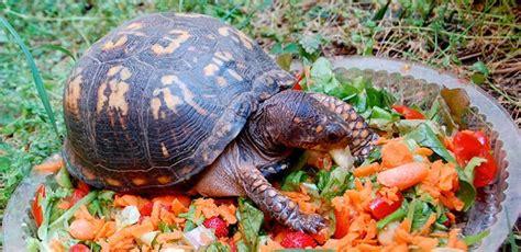 ¿Las tortugas comen en invierno? ️ » Respuestas.tips