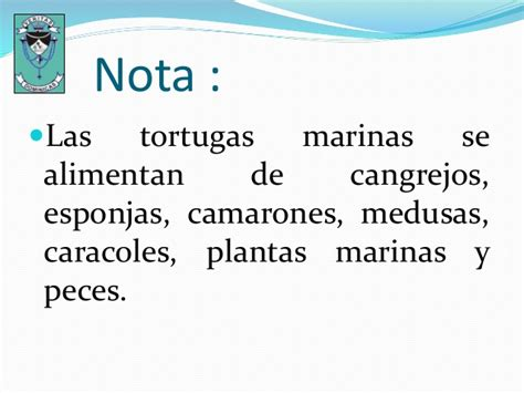 Las Tortugas Marinas.