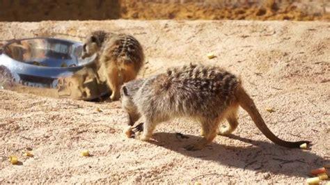 Le nouveau zoo de Rabat par loviss   YouTube