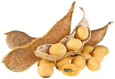 Le soja, soya  Fiche légume, valeurs nutritionnelles ...