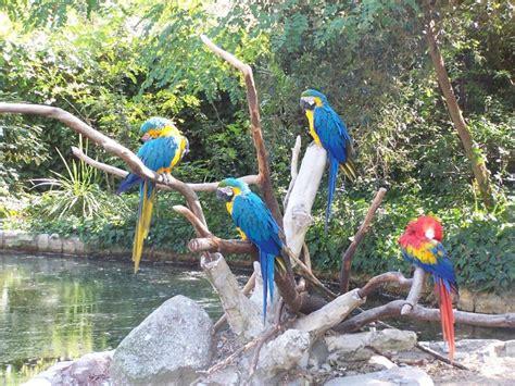Le Zoo de la Palmyre en Charente Maritime   Tourisme près ...