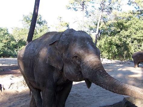 Le Zoo de La Palmyre   Tourisme en Charente Maritime ...