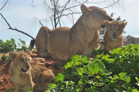 Le zoo de Rabat agit pour la planète