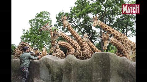 Le zoo de Vincennes sera  le zoo du XXIème siècle    YouTube