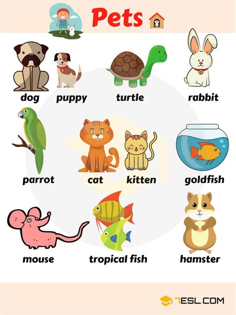 Learn Animals Vocabulary in English   ESLBuzz Learning English