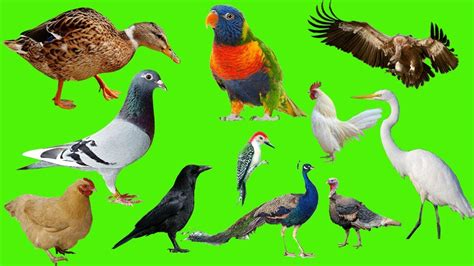 Learning For Kids | Animals, Birds, Animal Sounds, Fruits ...