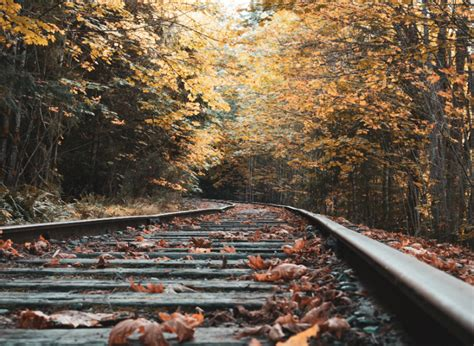 Leaves on the line: will the rail industry ever win its ...