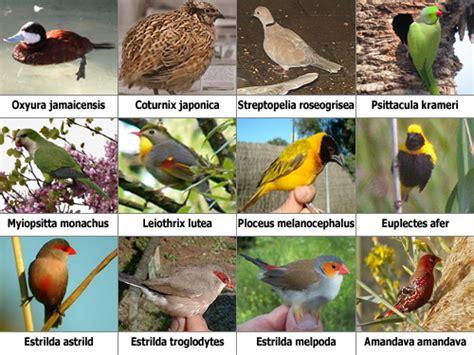 Legislación sobre aves exóticas   SEO/Birdlife