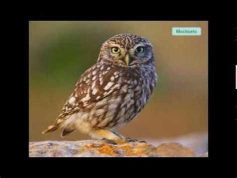 Lenguaje musical pájaros aves.wmv   YouTube