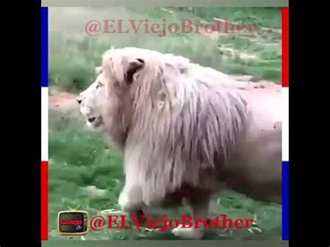 León  Hello  y  Good Morning  :v   YouTube