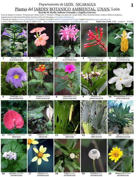 León    Jardín Botánico Ambiental Unan Plants | Field Guides