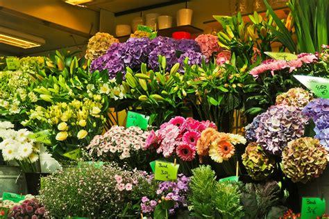 Les ventes de fleurs et plantes d'intérieur en repli ...