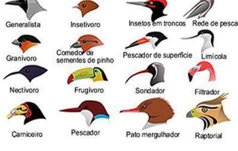 Letirroja  on Twitter:  Alimentación en aves: tipos de ...